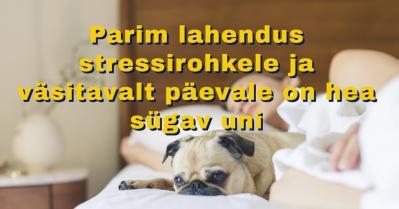 Parim lahendus stressirohkele ja väsitavalt päevale on hea sügav uni!
